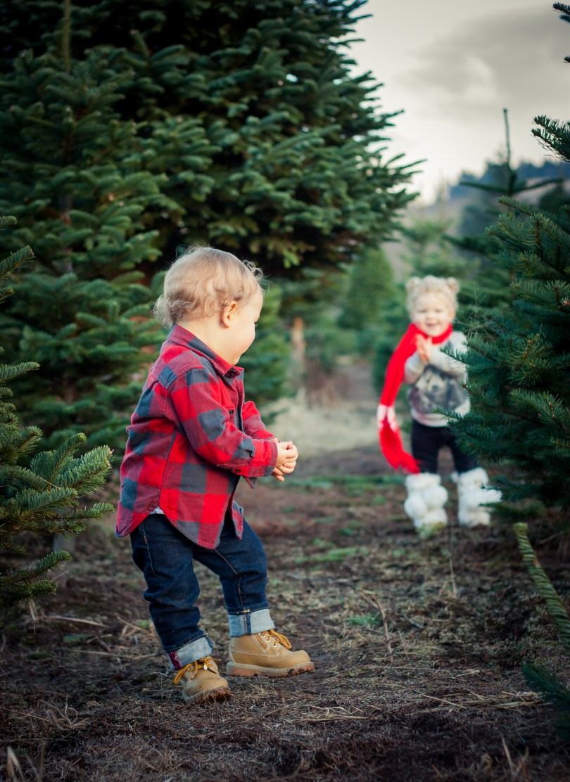 christmas tree farm photo shoot