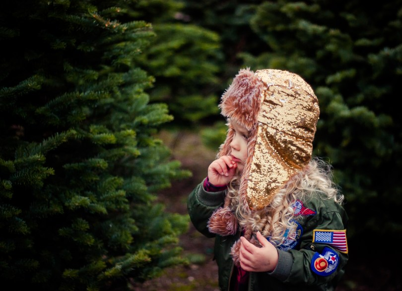 The Great Tree Hunt 2016