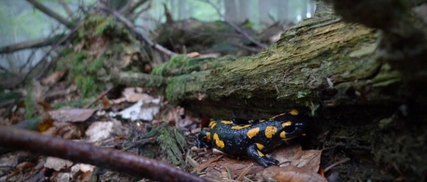leśne błądzenie po latach – jesień w Beskidzie Niskim