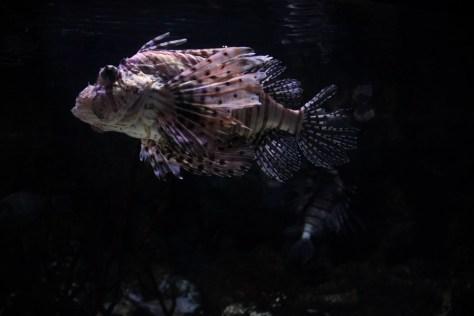 w akwarium