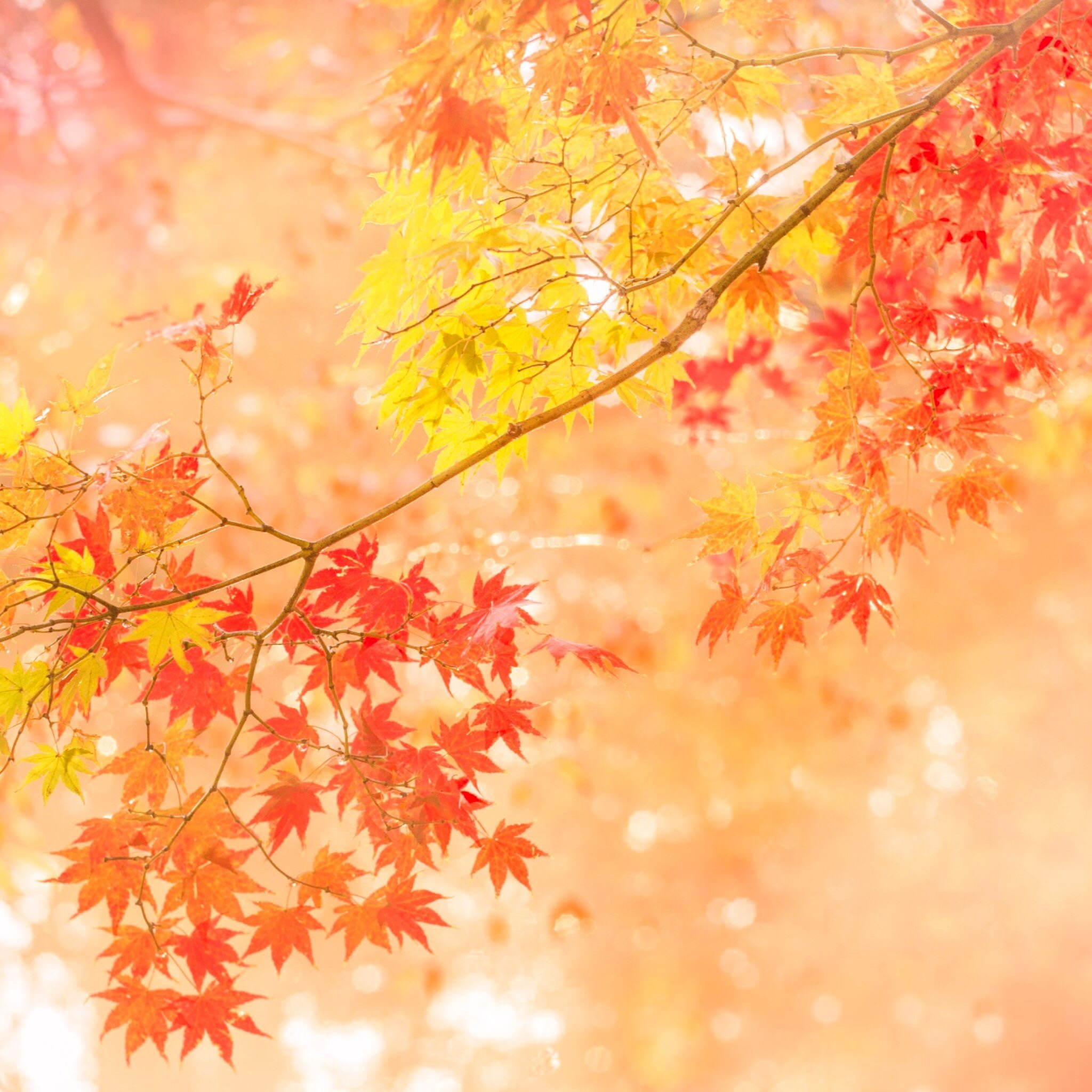 Fall Leaves Watercolor Wallpaper Dossier Applications Iphone Et Ipad L Automne En Photo