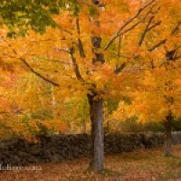 Northern Berkshires Fall Foliage Festival Parade