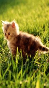 kitten_grass