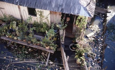 Amz House with Plants Manaus