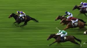 Race Horse Breeding Darwinian Evolution