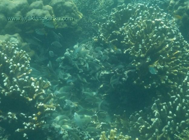 snorkeling pulau pahawang lampung 10