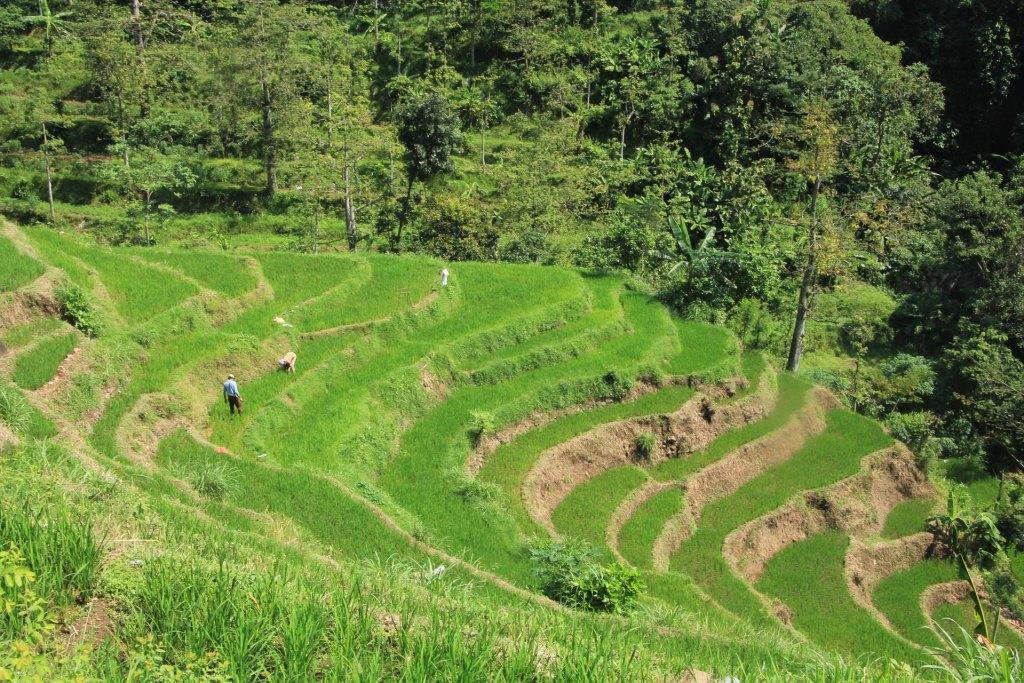 pertanian-lereng-gunung-penanggungan