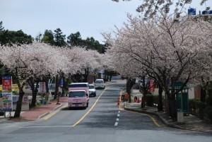 sakura truck