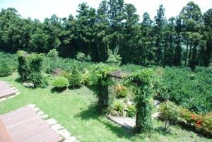 data garden sm DSC 0124