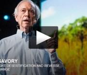 Jak zielenić pustynię i cofać zmiany klimatyczne?
