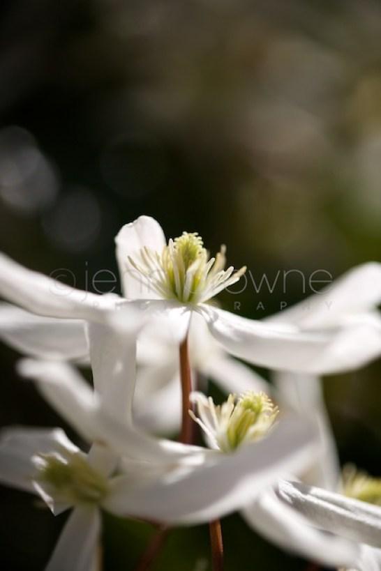 my garden _ 5
