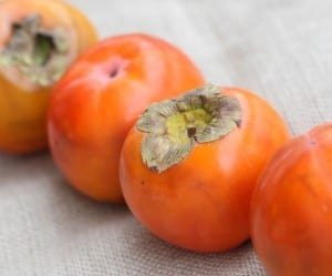 Persimmons-in-a-line-300x249