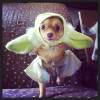 2 Homemade Halloween Treats for Your Pets - Jen Around the ...