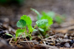 Weeds rob the vegetables of nutrients, water, and space. I really like ...