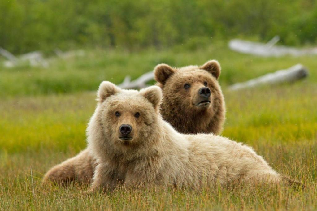 picture of bears 1024x682 Disneynature Bears Trailer Don't Miss the Heartwarming Sneak Peek