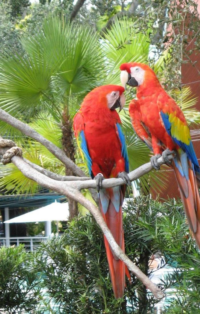 Busch Gardens – Tampa Bay The Best Family Attractions in Florida