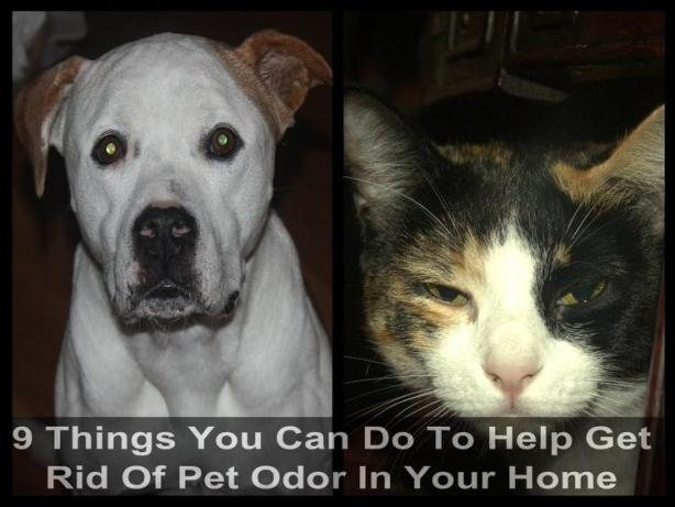 white dog on left and black brown and white cat on the left 9 Things You Can Do To Help Get Rid Of Pet Odor In Your Home