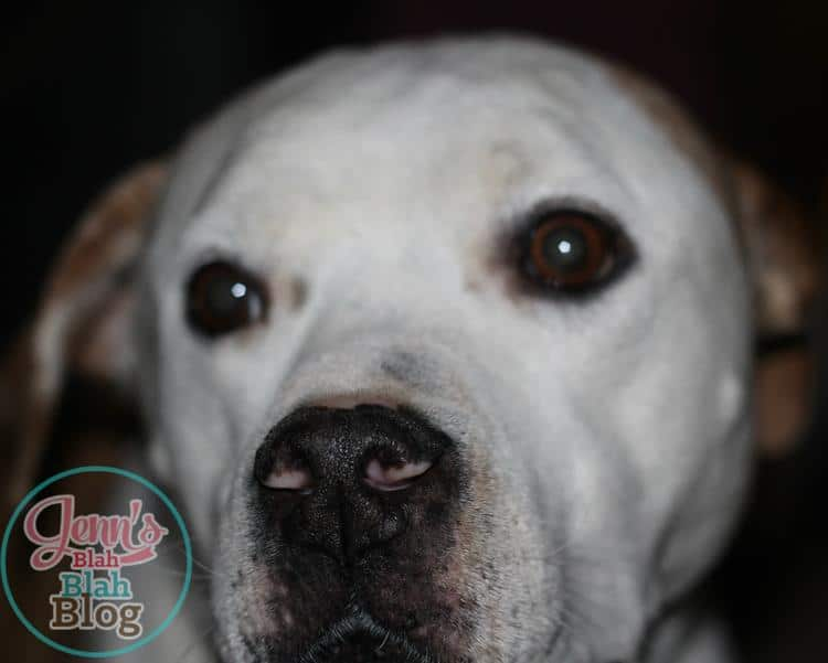 4 Ways To Show Your Dog You Love Them & #FREE Smaple of Purina One®