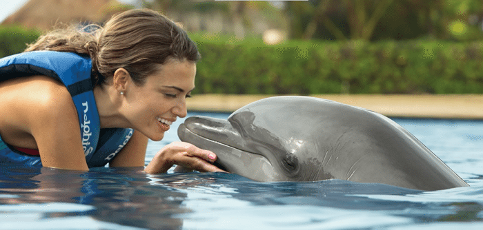 """swimming with the dolphins  """"Choose Your Escape"""" Learn How We Can Win A Dream Vacation #ResortEscape swimming with the dolphins"""