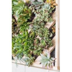 Small Crop Of Succulent Hanging Garden