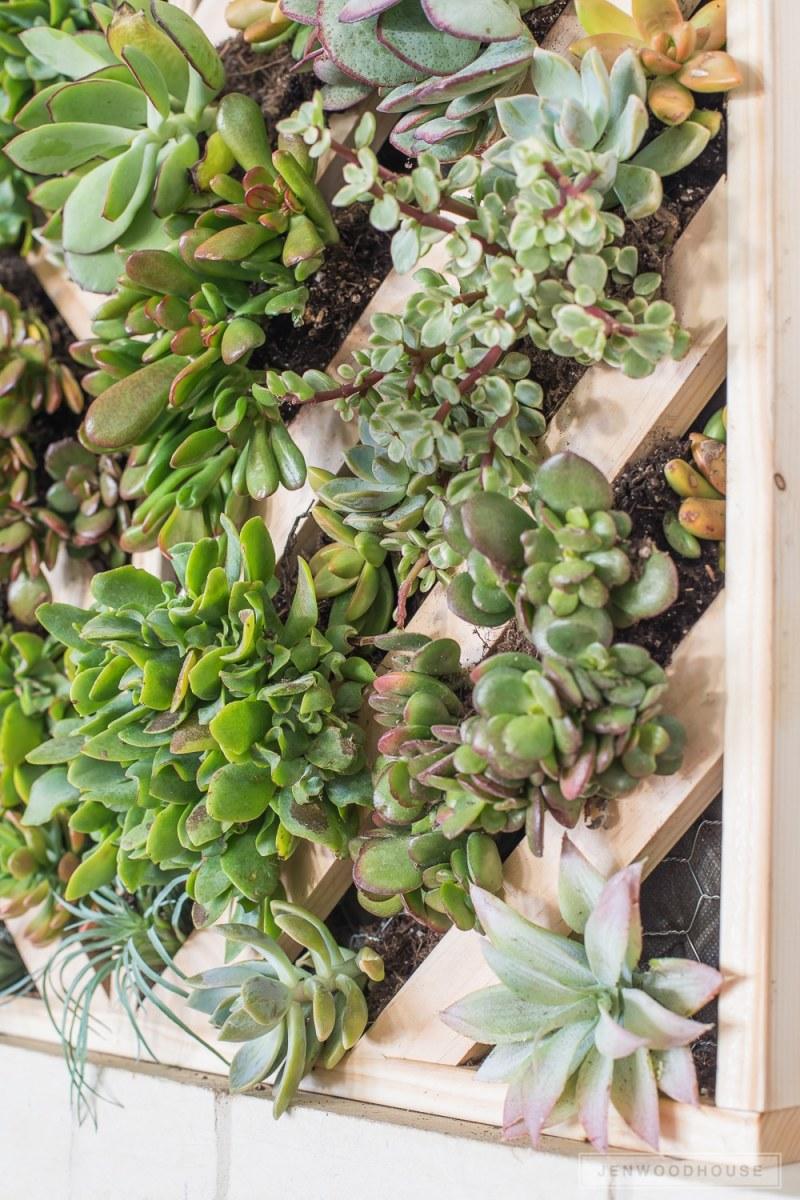Large Of Succulent Hanging Garden