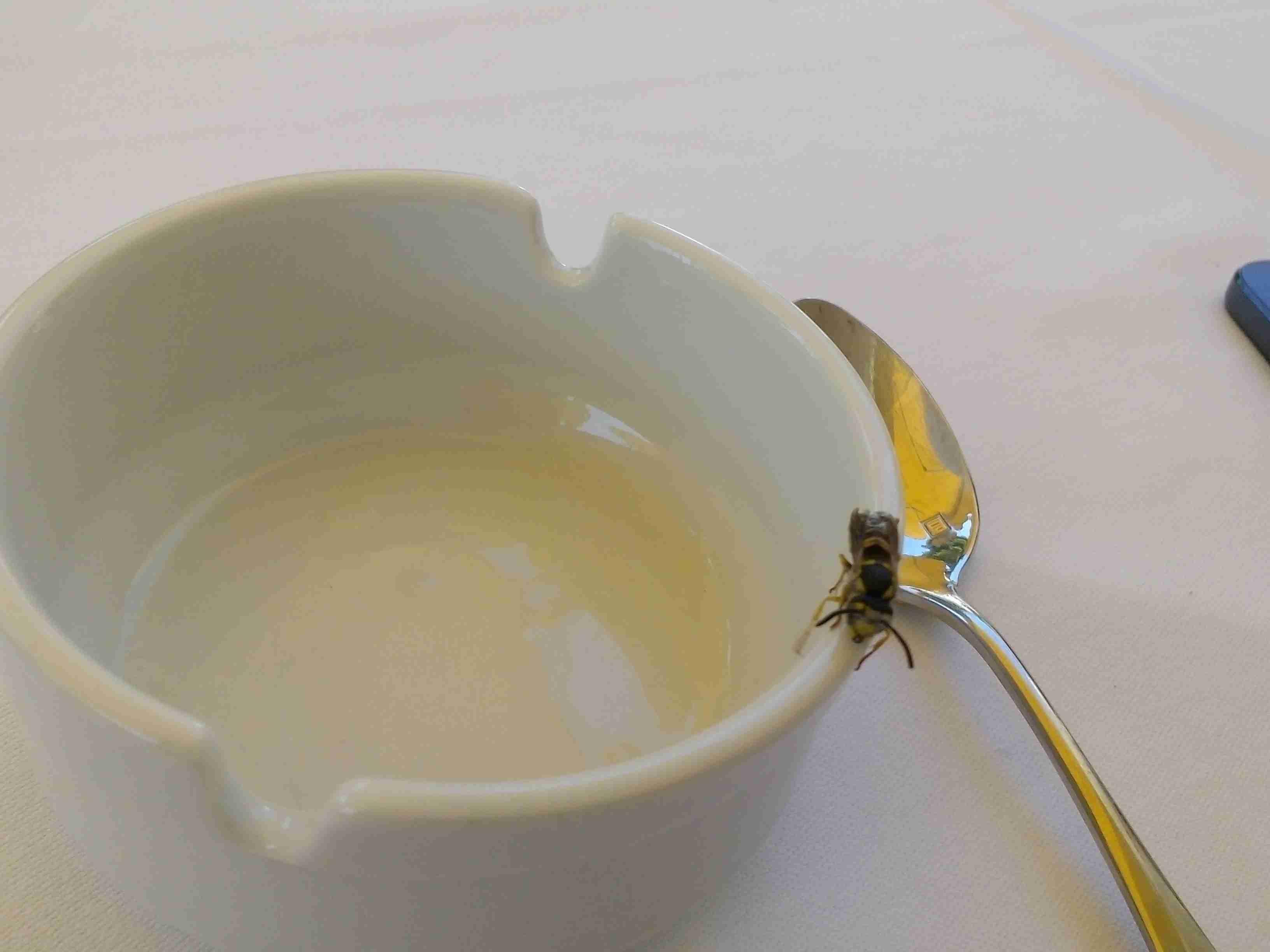 Schmeißfliegen In Der Küche | Best Drip Line Küche Galleries ...