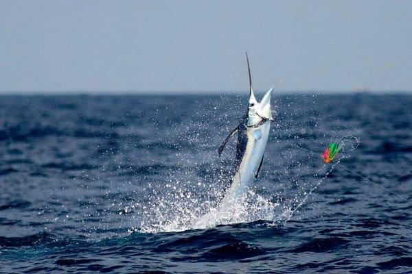 Fishing ocean city maryland jerkyholic for Ocean city maryland fishing