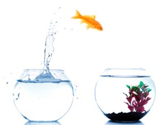home change for a goldfish to a better place