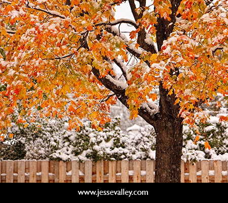 Fall Leaves Falling Wallpaper Maple 171 Jesse Valley Photography Blog