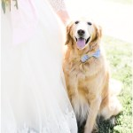 Wedding puppy with blue bowtie, navy and pink southern wedding | Ivan & Louise Images and Jessica Dum Wedding Coordination