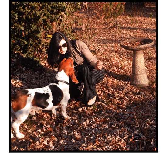 autumn in the garden with moose the basset hound kansas