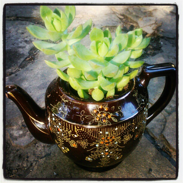 Plant a Cactus in a teapot!