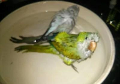 Birdies in a Bath
