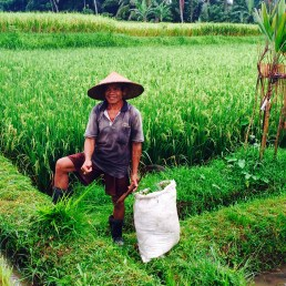 rice farmer - ubud bali