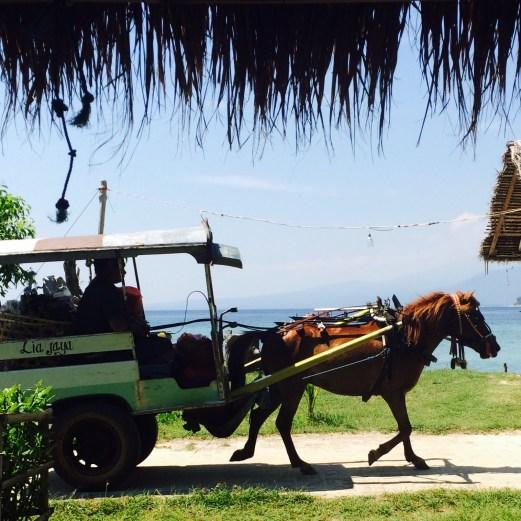 Gili Meno horse cart
