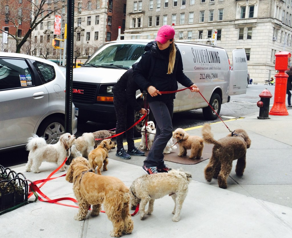 dog walkers New York City