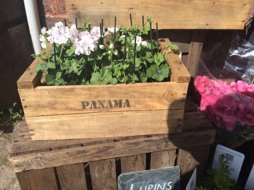 Panama flowers