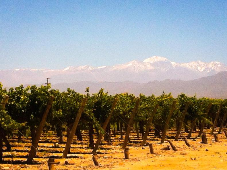 grape vines and mountains Mendoza, Argentina