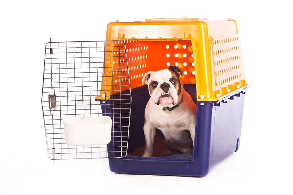 Travel Air Kennel Pet Travel Into Australia Jetpets