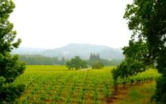 sonoma wine california san francisco
