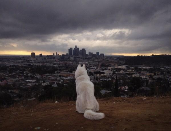 Tumblr John & Wolf