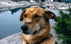 Instagram Camping with Dogs