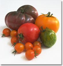 What's an heirloom tomato anyway? / JillHough.com