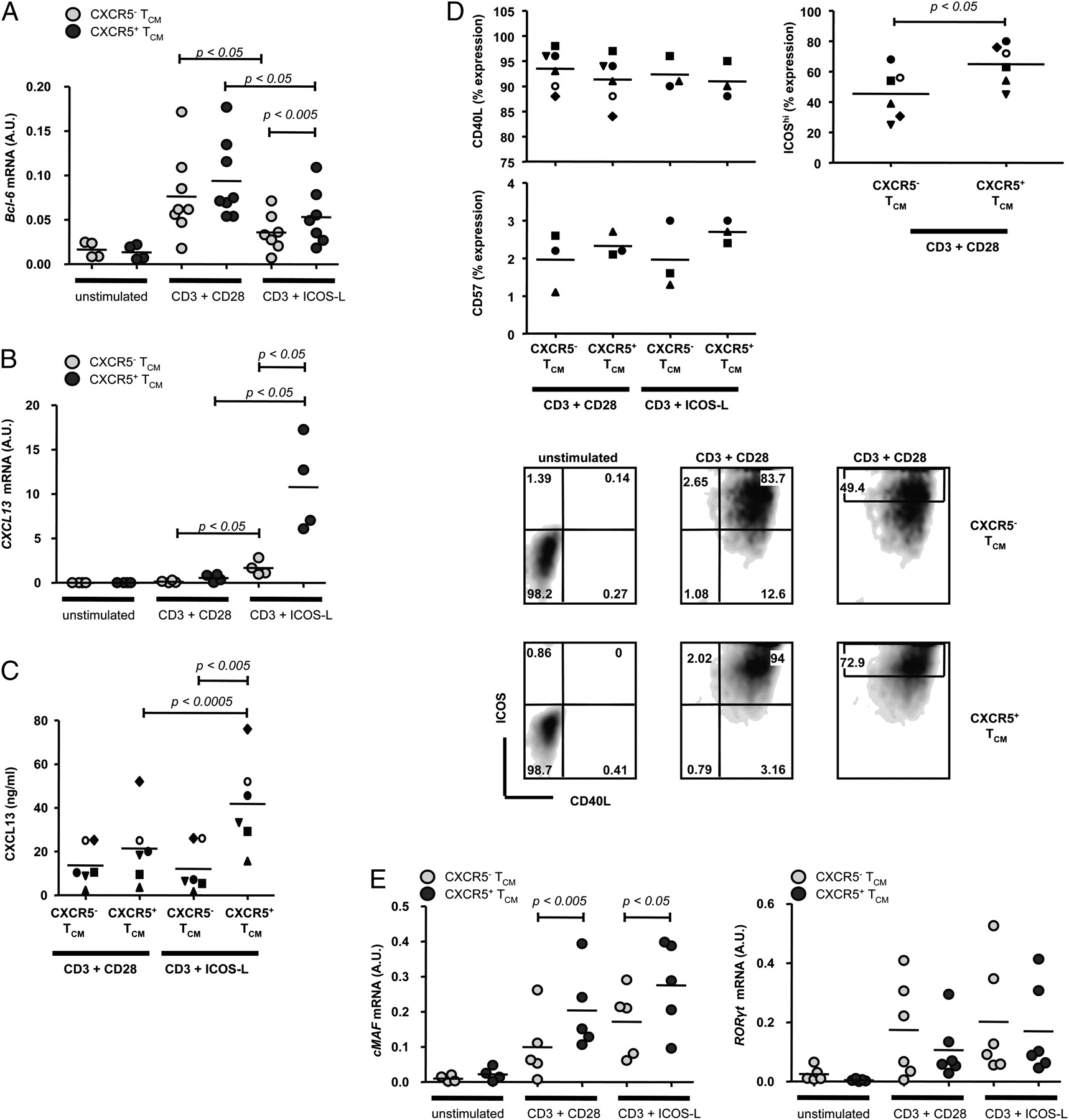 Hermann Kuchen Brief Cxcr5 Expressing Human Central Memory Cd4 T Cells And Their