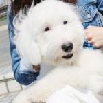 Zip新しい犬『そら』の犬種!性別や年齢は?かわいい画像まとめ!