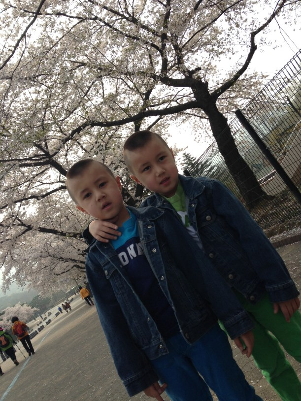 Cherry blossoms were in full bloom, but even that wasn't enough to cheer up my boys up during the long walk to the zoo!