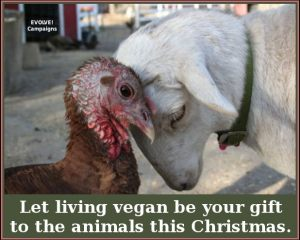vegan gift