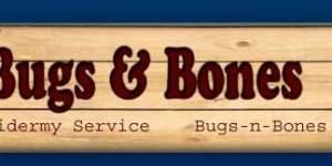 bugs_header