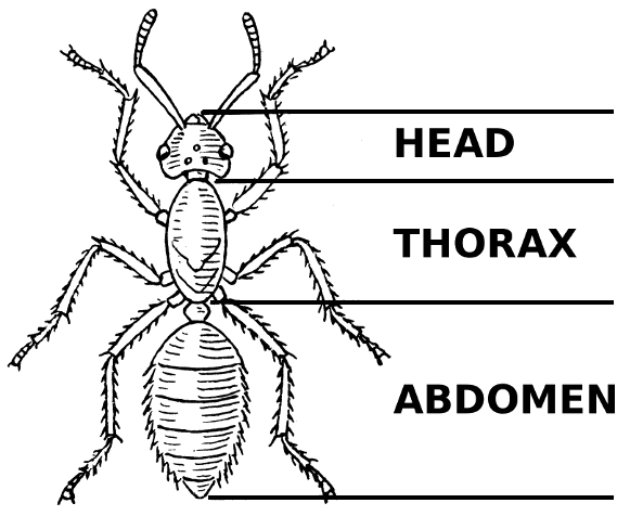 insect anatomy diagram worksheet