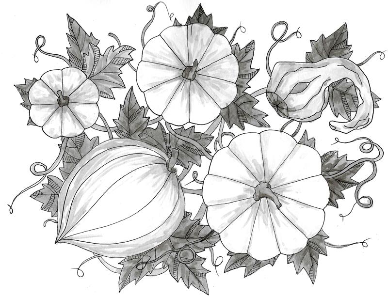 Ink Pen Botanical Drawings